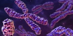 cromosoma-270314-700x352